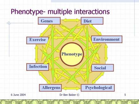 Phenotype Interactions